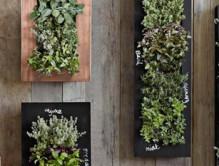 i_chalkboard-wall-planter